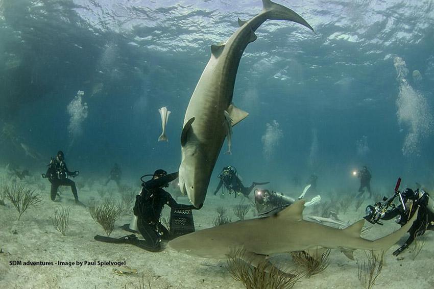 Interactuar-tiburones