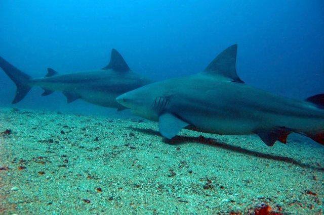 Interactuar-tiburones2