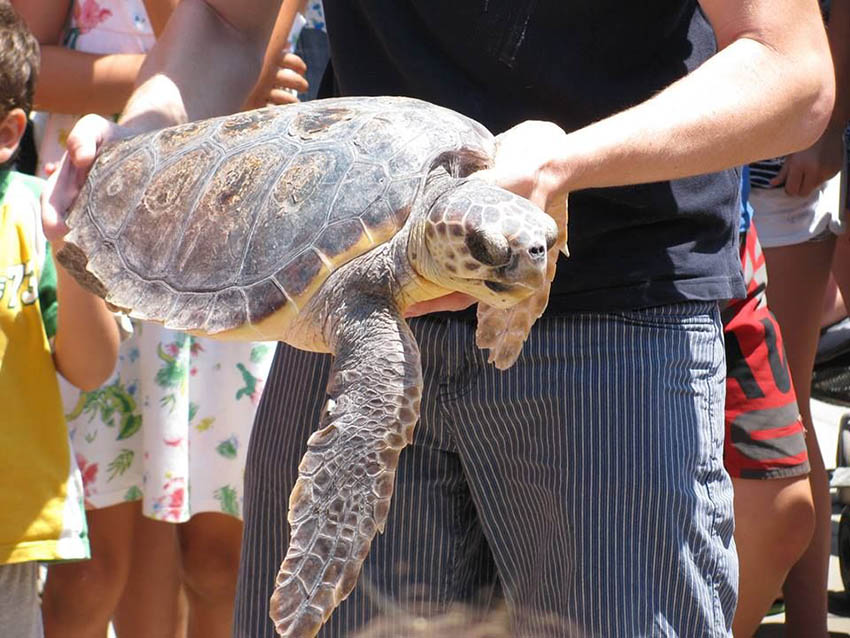 Interactuar-tortugas