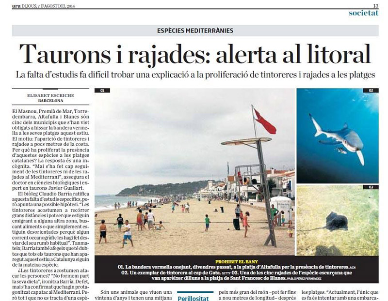 tiburones en casa - noticia